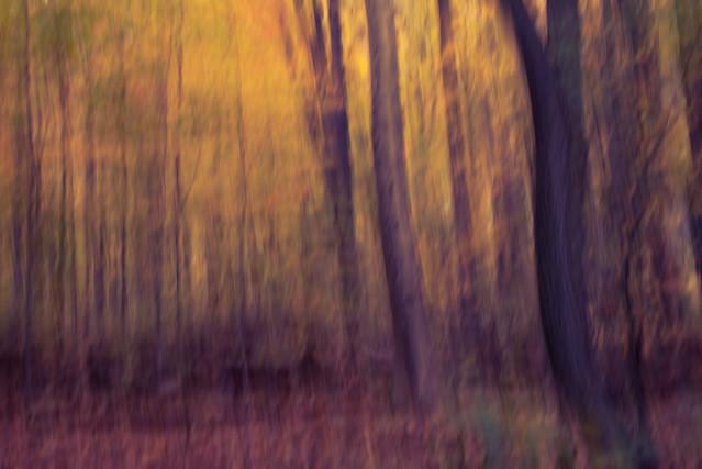 Impressionist Art (ICM), Nikon D750, Sigma 24-70mm F2.8 IF EX DG HSM