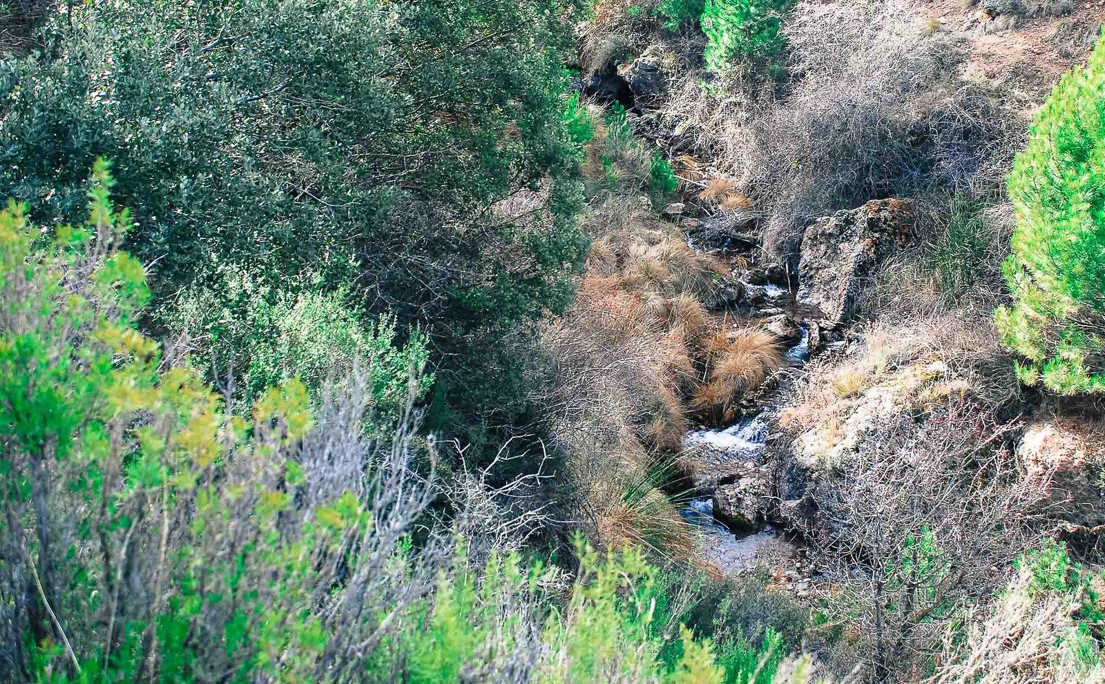 Arroyo de la Fonfría