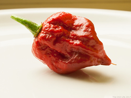 Carolina Reaper Chili Pepper