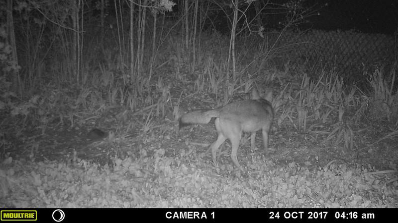 coyote-20171024-101