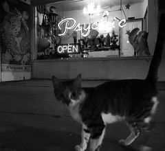 #kitty at the #psychic in #Venice