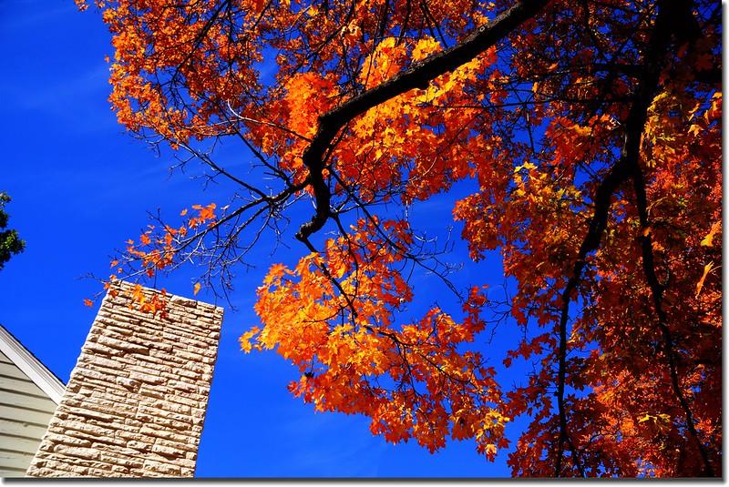 2017 Maple in Fall, Boulder, Colorado  (10)