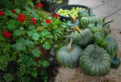 Mellow autumn 109