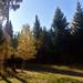 automne aux Fraux