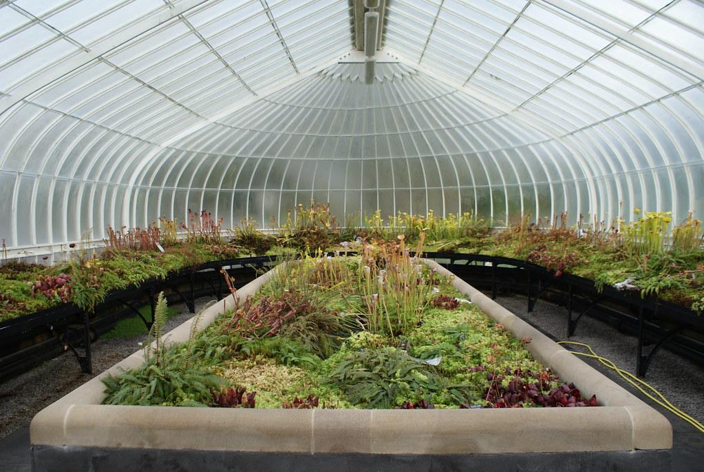 Serre du jardin botanique de Glasgow dédiée aux plantes carnivores.