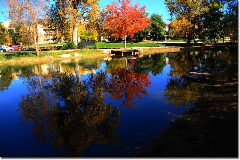 2017 Maple in Fall, Boulder, Colorado  (16)