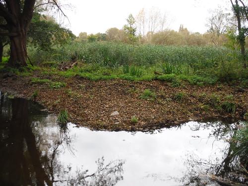Wetlands, Morden Hall Park