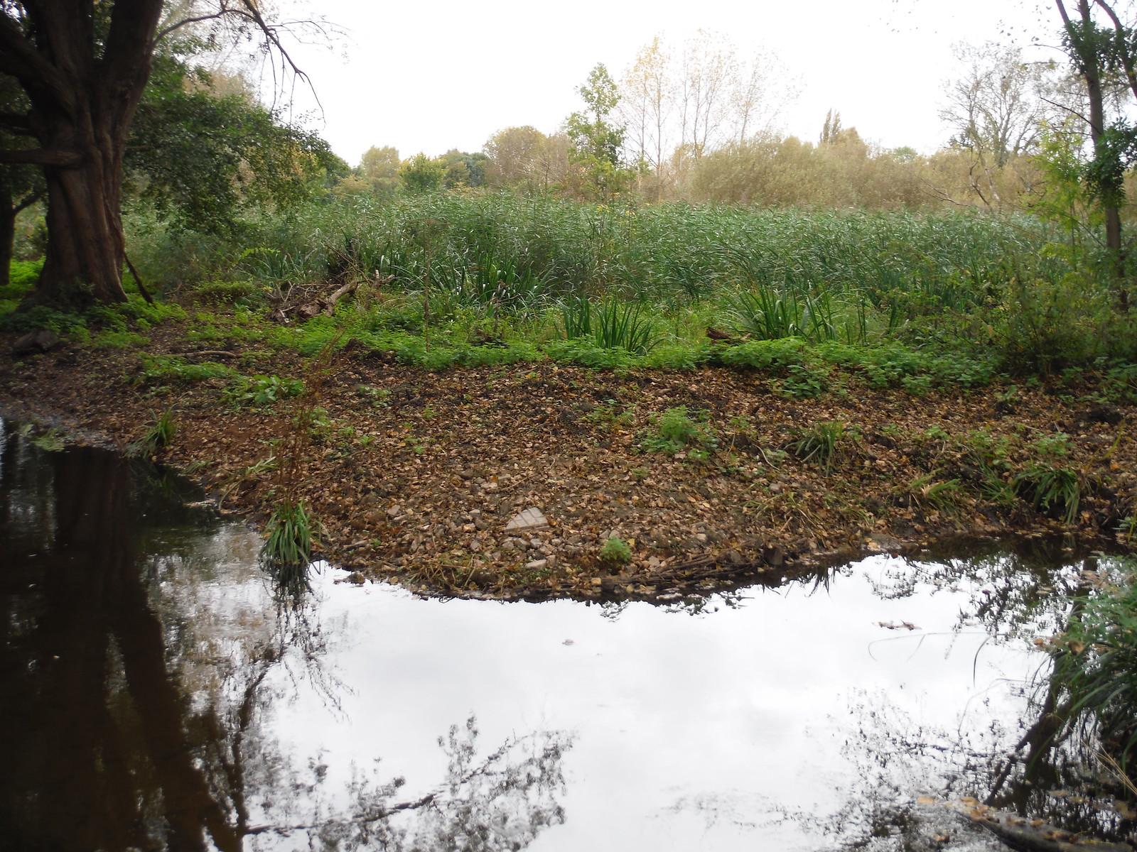 Wetlands, Morden Hall Park SWC Walk Short 13 - Morden Hall Park and Merton Abbey Mills