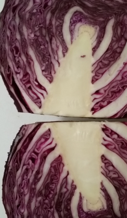 Red Cabbage Innards