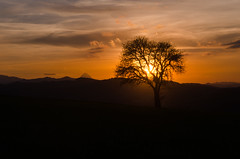 A Tree in the Sunset