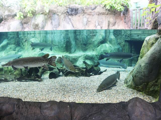 river safari Gradini si Parcuri din Singapore 2
