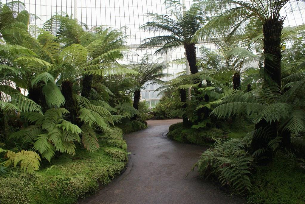 Forêt de fougères tropicales au jardin botanique de Glasgow.