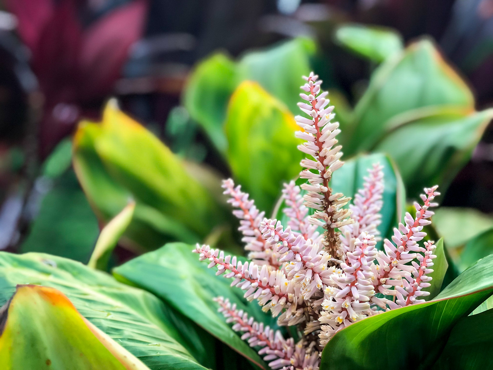 there are tropical flowers everywhere you look
