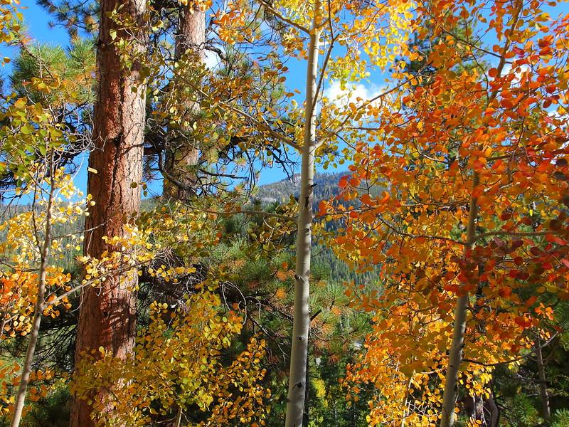 IMG_2004 Bristlecone Pine Trail