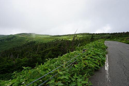 稜線沿いを行く道はどの道も間違いなくきれい