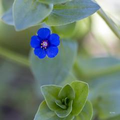 Lomas de Asia: Little Blue, II
