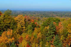 Chapin Forest Overlook