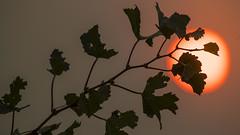 la-me-napa-sonoma-fire-pictures-041