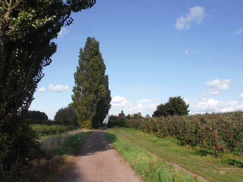 Track and orchard near Peete House