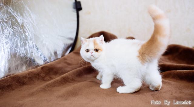 加菲猫@焦糖 弟弟