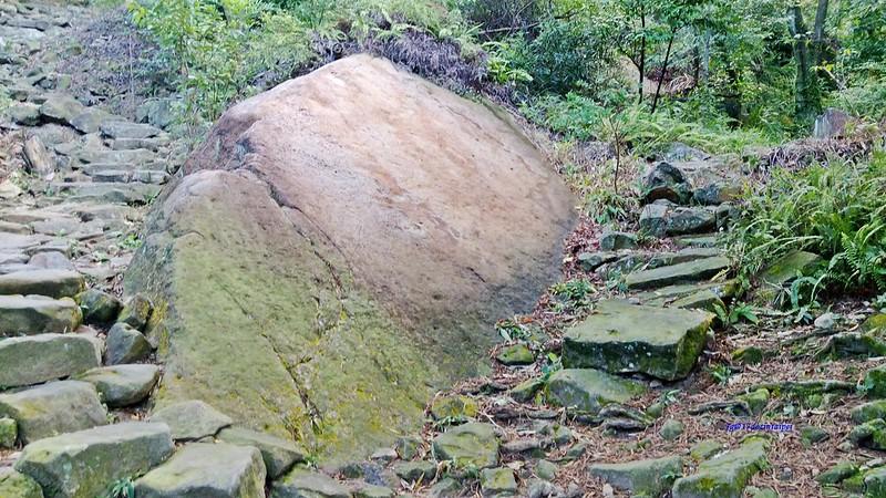 TAIPEI-bush walking-台北郊山健行-內湖金面山剪刀石-17度C隨拍 (5)