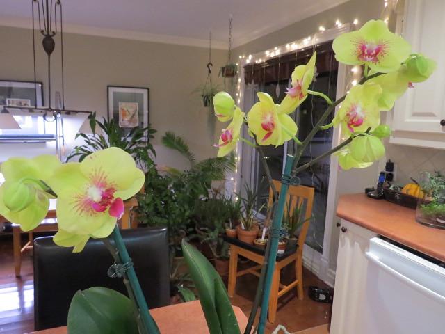 Orchidées chez lavandula - Page 2 37076064544_09727dcdc2_z