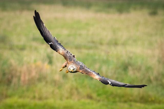 Full Wingspan
