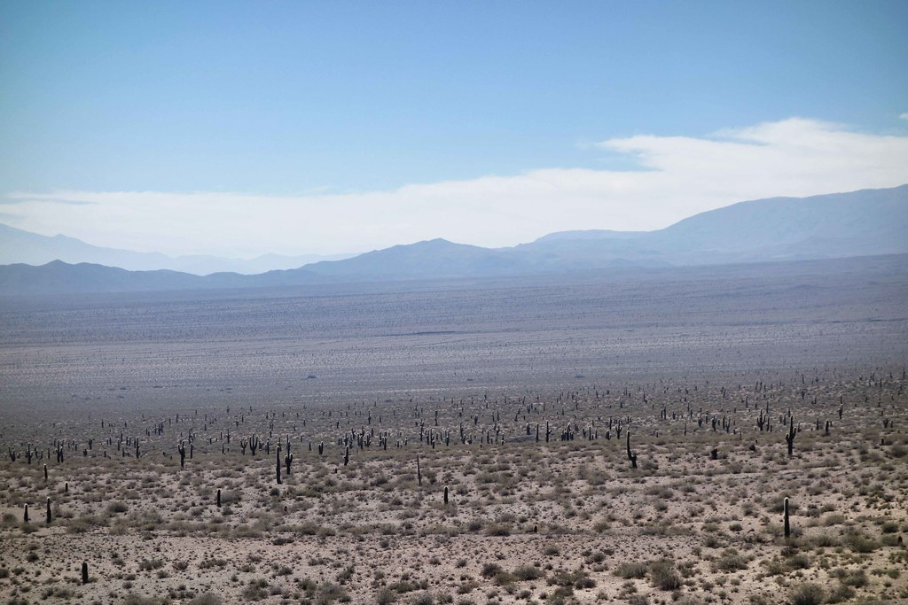 Salta Sud - Desert de cactus