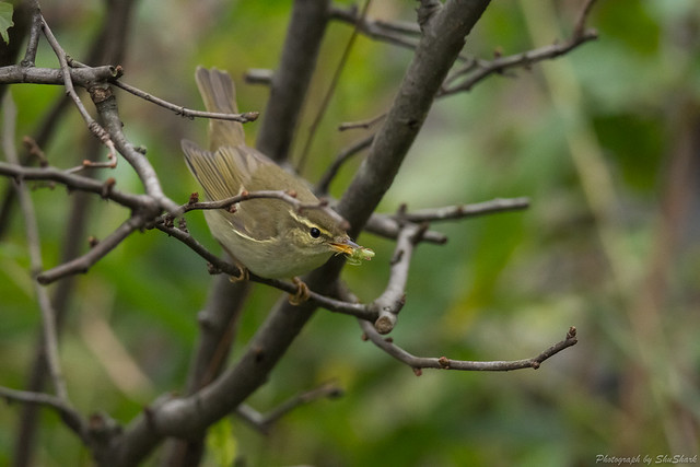 20171028-kingfisher-DSC_6451
