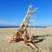 Sunset Beach Driftwood por sarider1