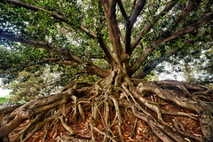 Roots in Buenos Aires, Argentina
