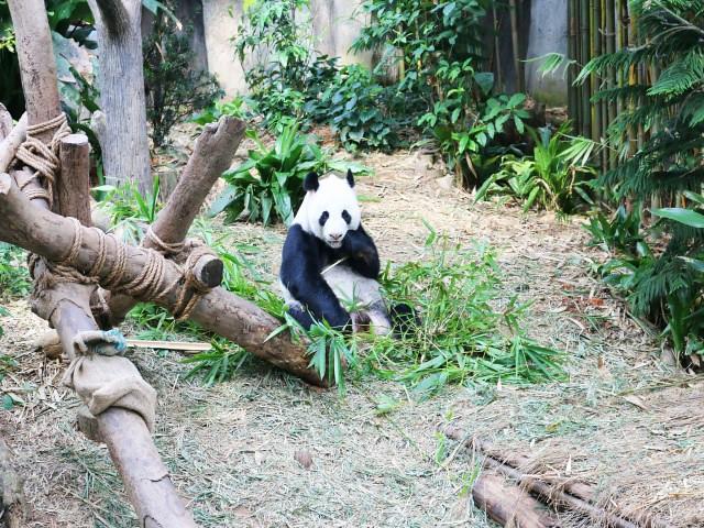 river safari Gradini si Parcuri din Singapore 4