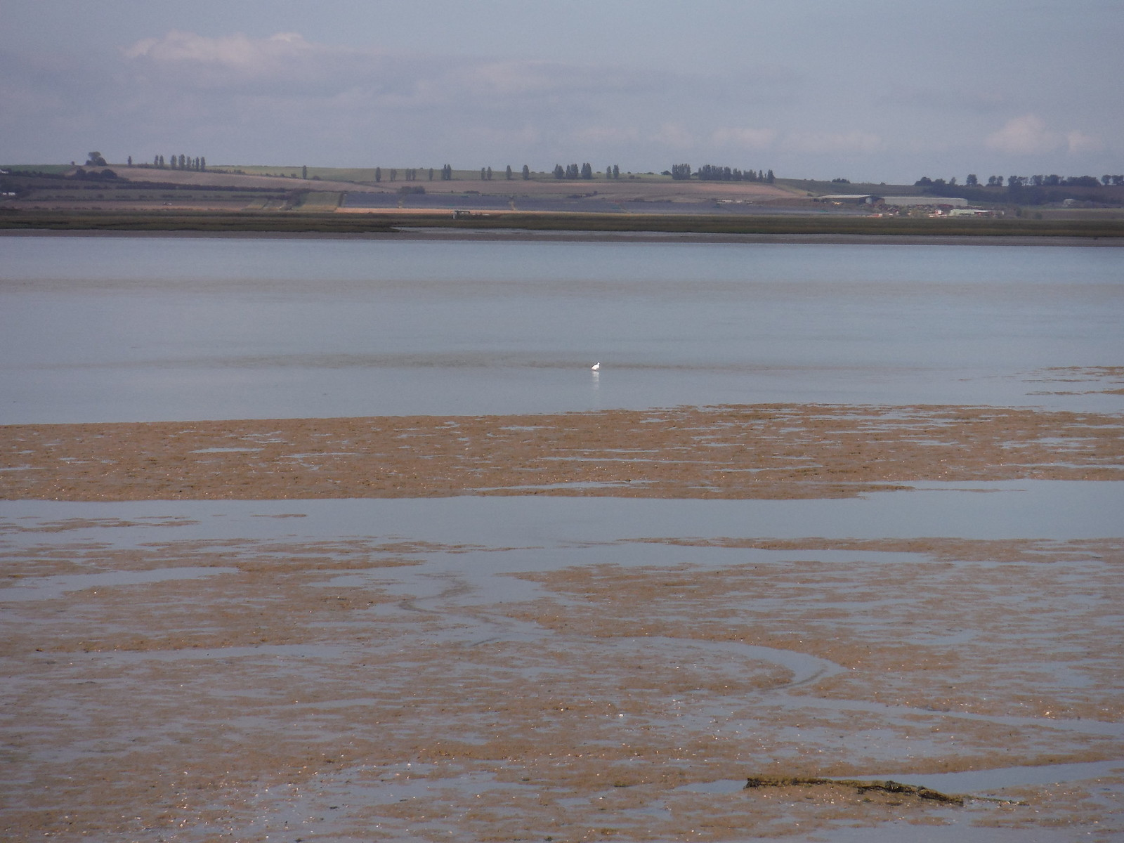 Mudflats, The Swale and Isle of Sheppey SWC Walk 299 - Teynham to Faversham