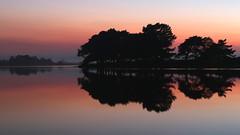 Hatchet Ponds, New Forest