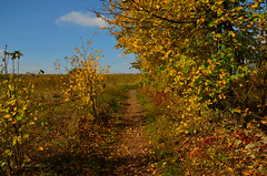 Polish Golden Autumn 🍁