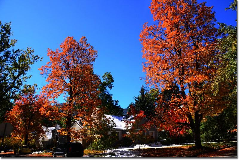 2017 Maple in Fall, Boulder, Colorado  (11)