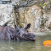 Fresno Chaffee Zoo - Greater one-horned Rhinoceros
