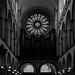 Chasseur de lumière - Rosace cathédrale notre dame