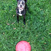 Leia and frisbee