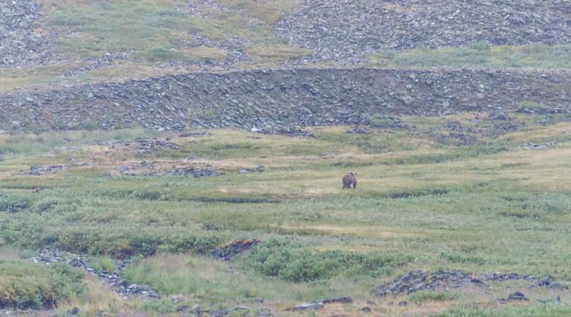 Медведы на Полярном Урале