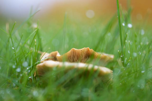 Autumn mushrooms, Canon EOS 6D, Canon EF 100mm f/2.8L Macro IS USM