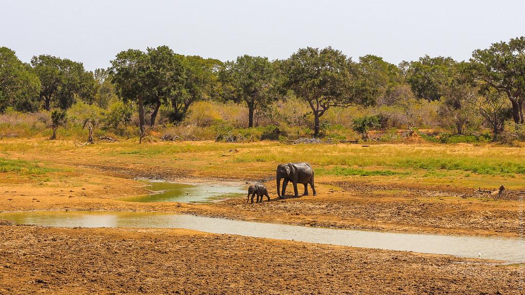 25.06-Yala-National-Park-Sri-Lanka-canon-1500px-049