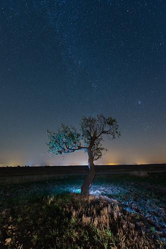 arboles nocturnos 37459341770_ec140f1e1e