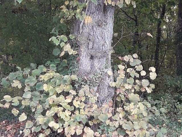 Troncs d'arbres 15/365