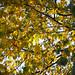 Botanic Gardens Edinburgh Oct 2017 -50