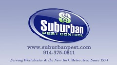 Bee Commercial - Suburban Pest Control