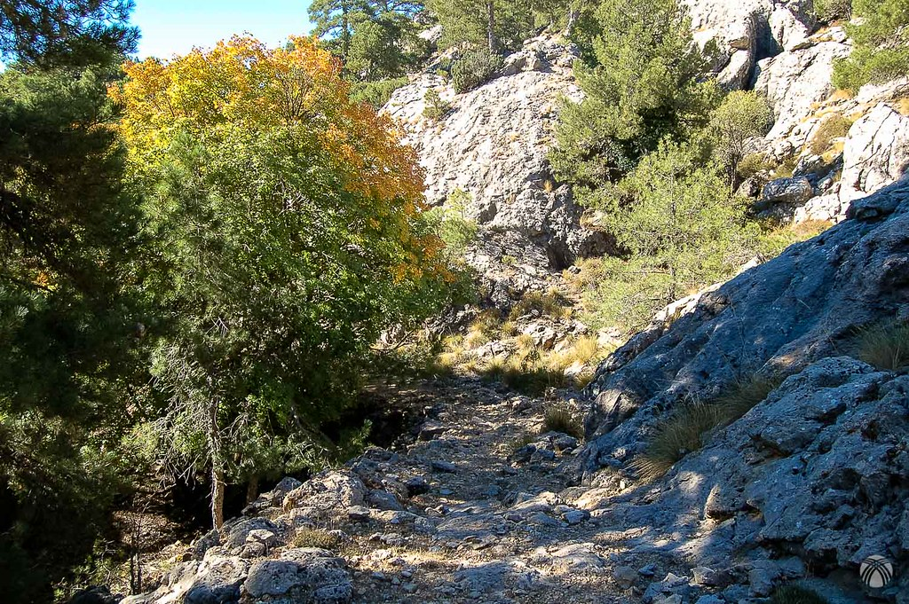 Otro detalle del camino en la Hoya del Bailaor