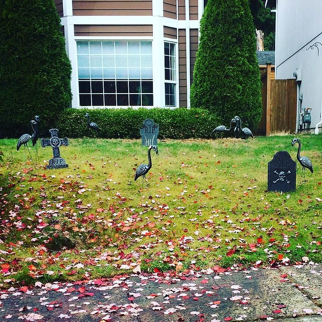Spotted in my neighbor's yard: zombie flamingoes! Cute! 👻