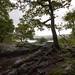 Jenkin Crag, Skelghyll Wood, Ambleside  2