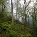 Skelghyll Wood, Ambleside  5